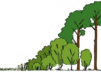 Ri-Buitenbouw- buitenbouw-bosranden-zoom-mantelvegetatie
